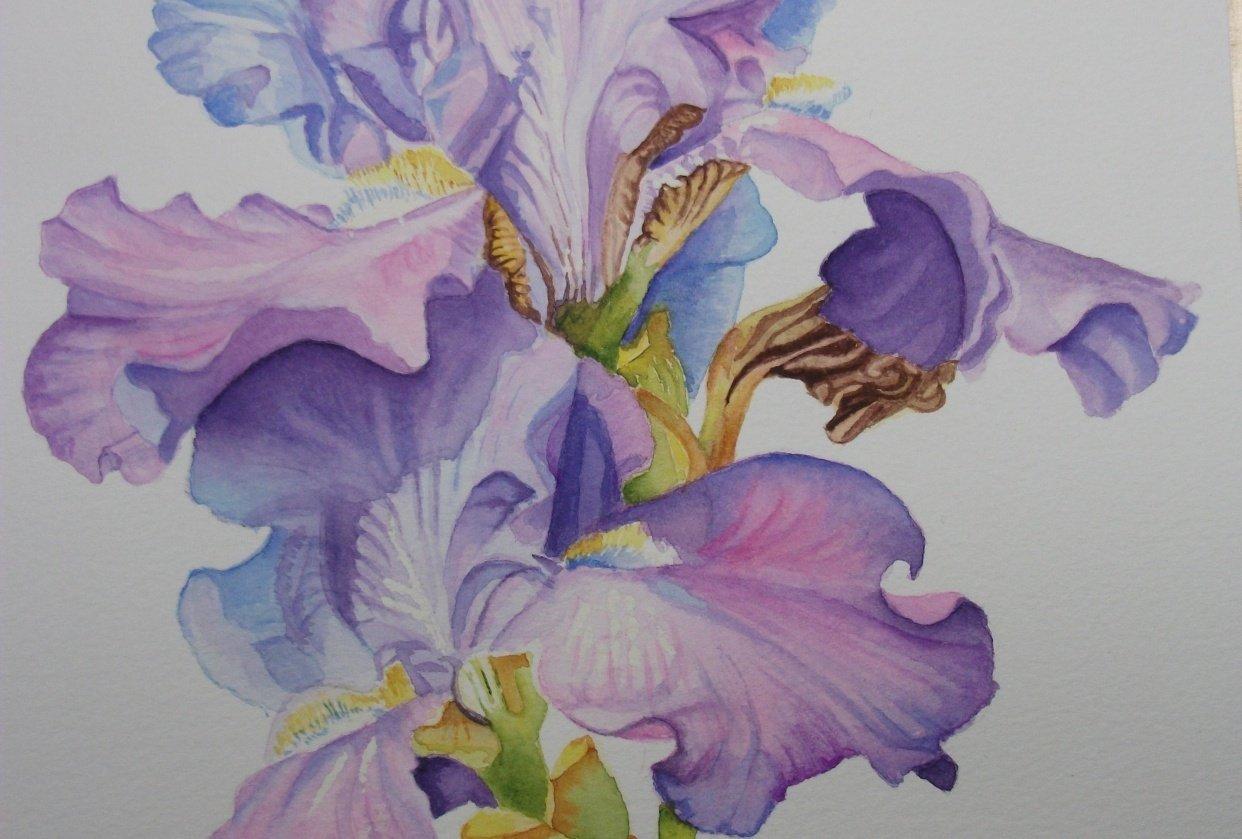 Debbie's Iris - student project