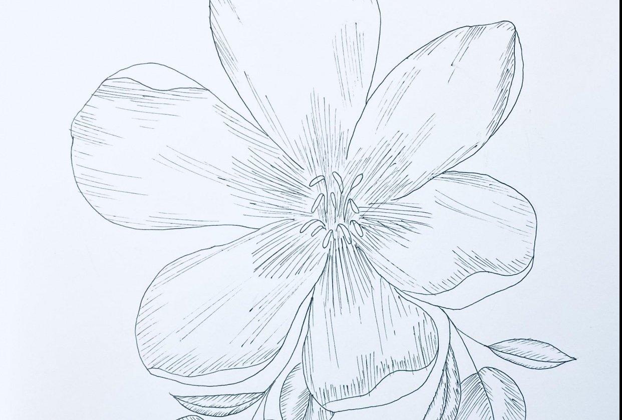 Zendoodle - Florals - student project