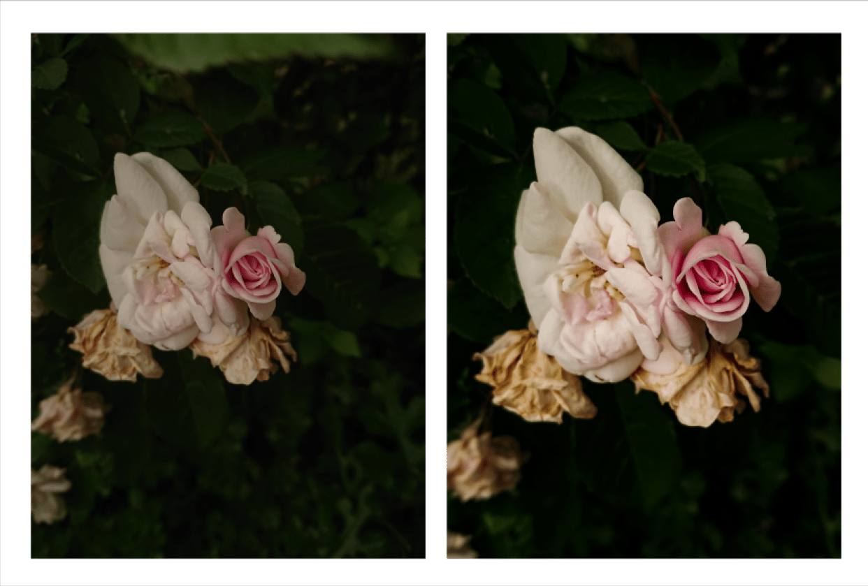 Photo editing -- Flowers - student project