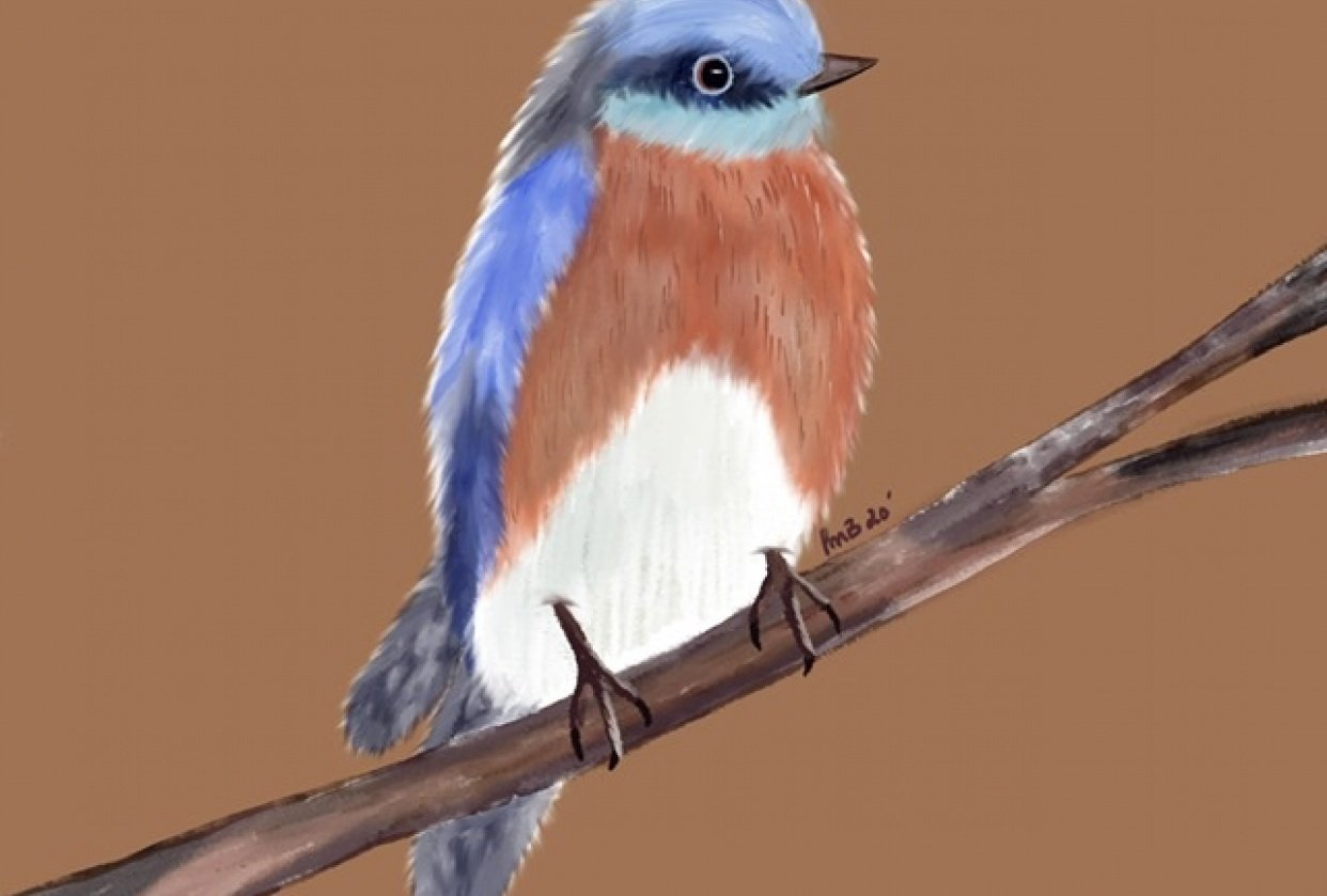 Drawing Birds - student project