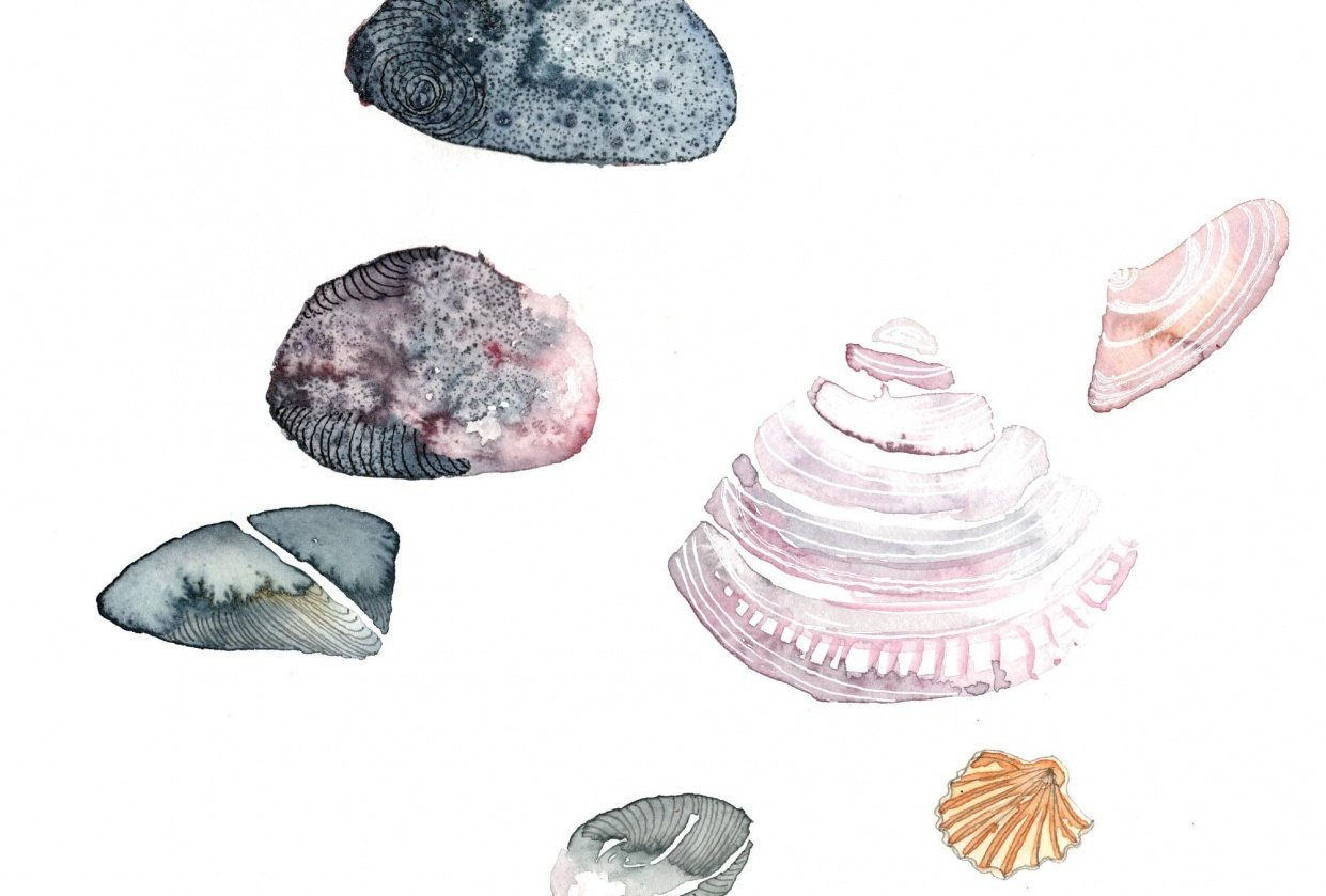 Shells and pebbles - student project