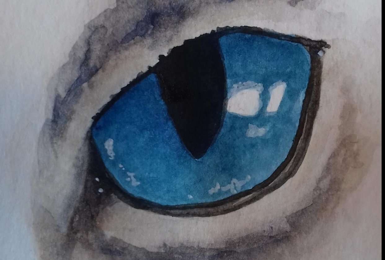 Animals Eyes - student project