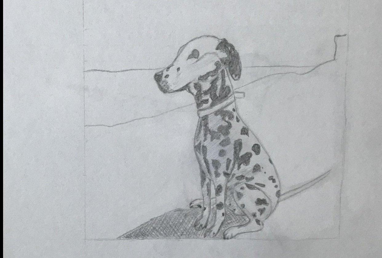 Dalmatian - student project