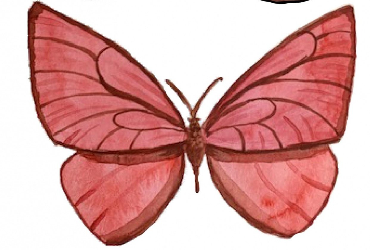 Butterfly Study - student project