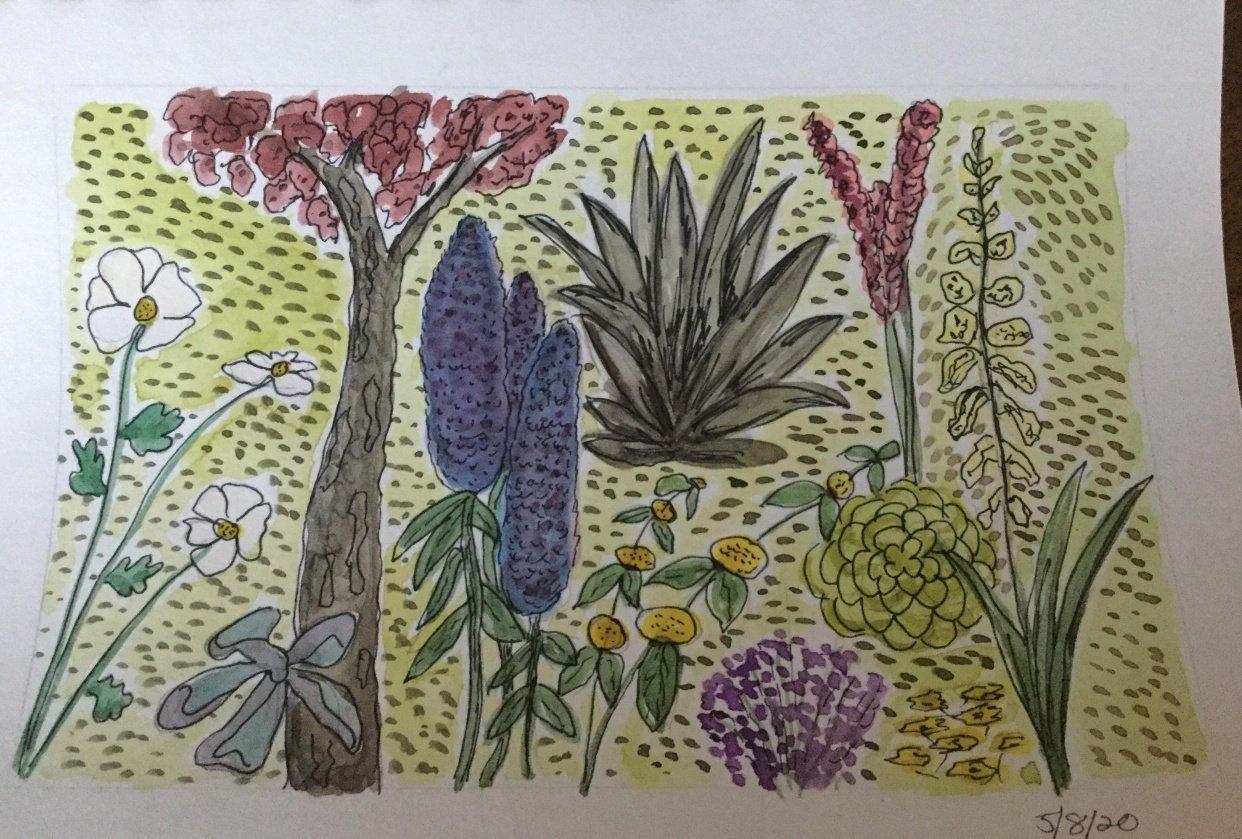 Botanical Illustration - student project