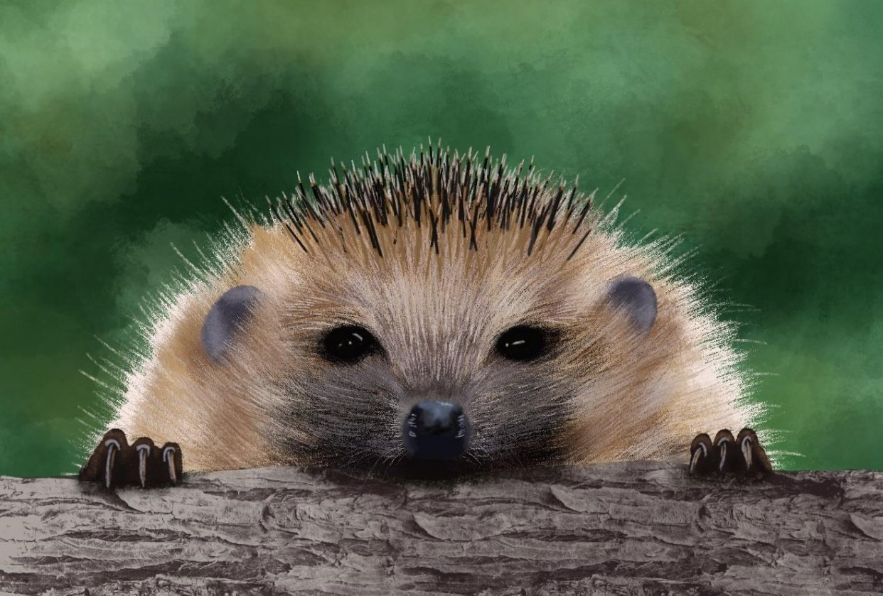 Hedgehogs - student project