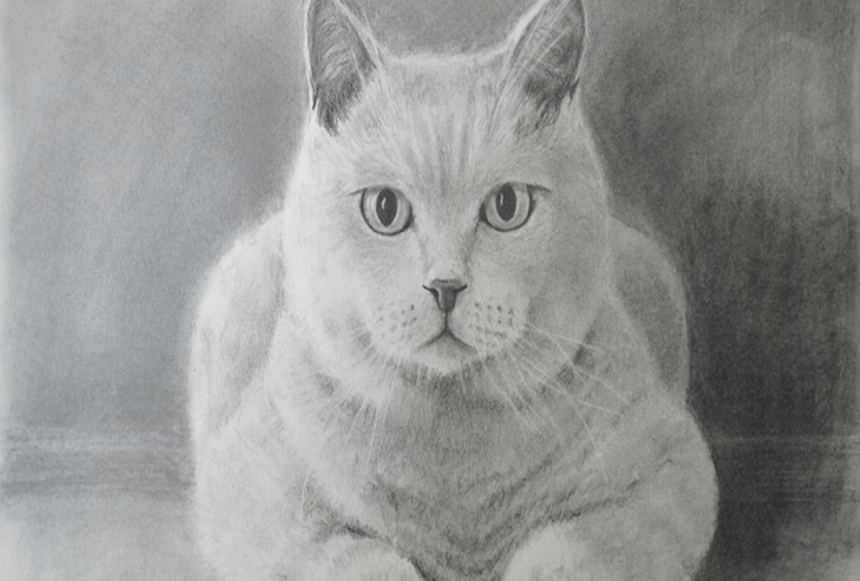 Cat - student project