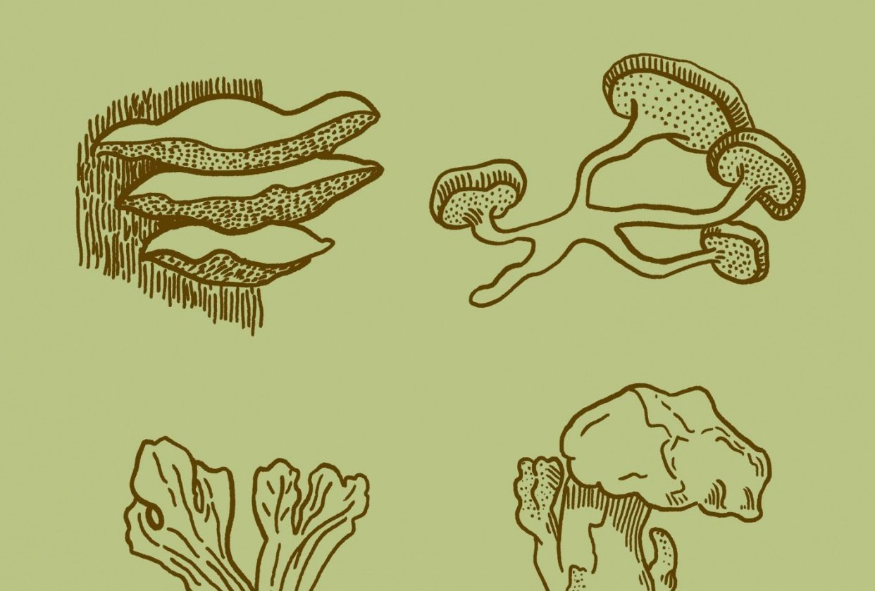 Fungi – Upside down drawing - student project