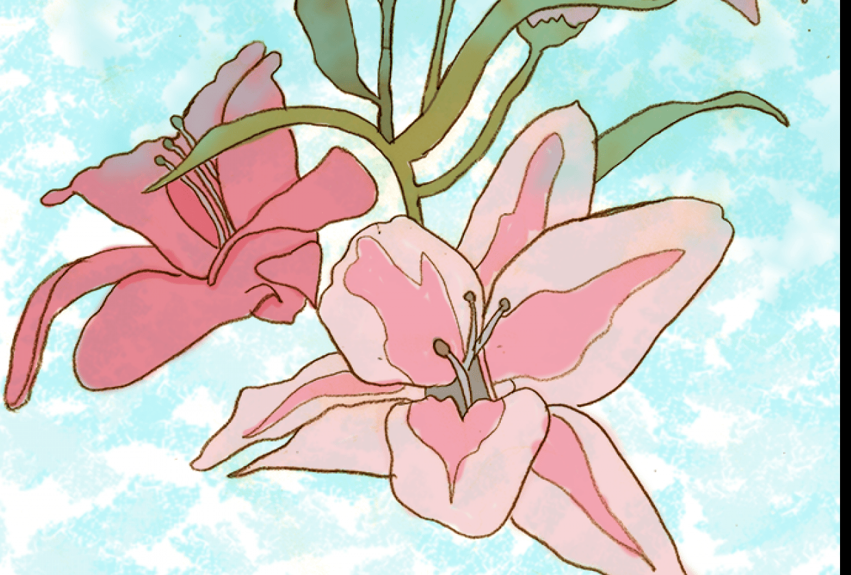 Lilies - student project