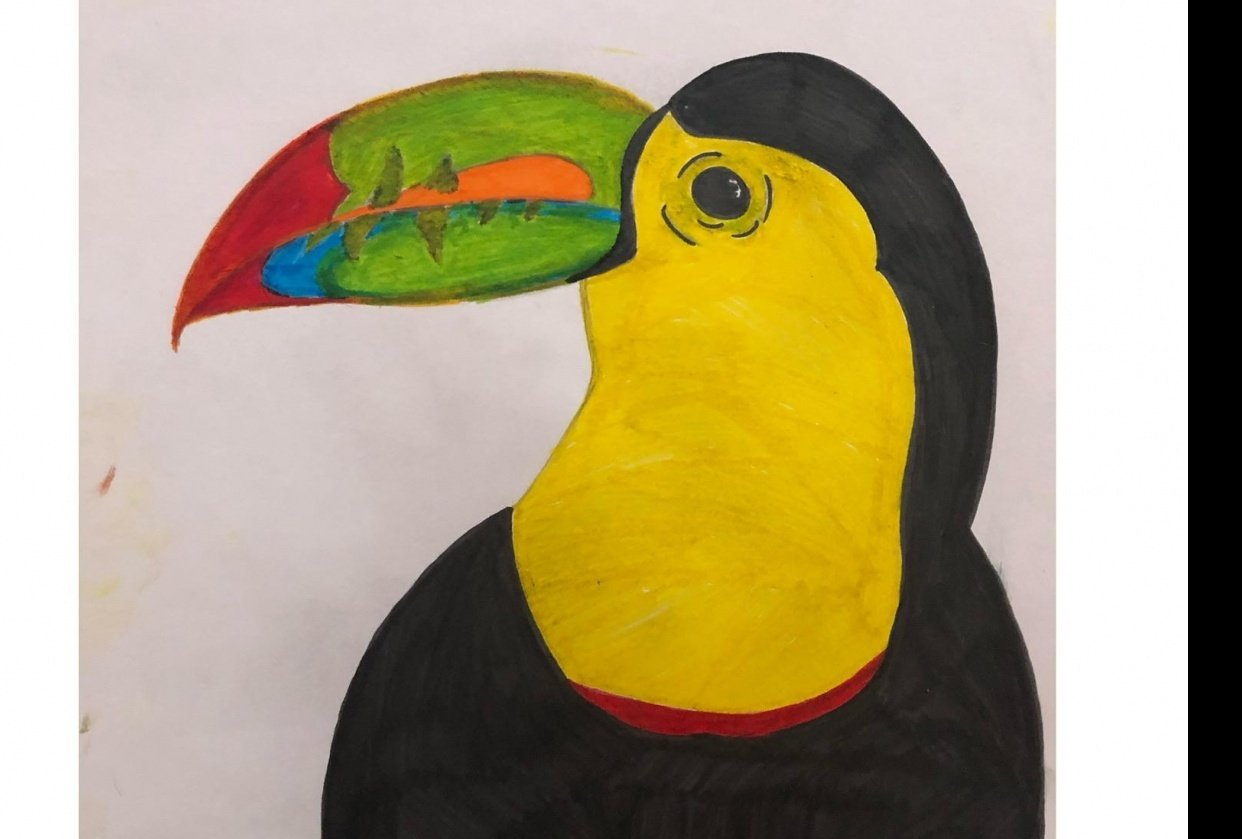 Toucan in Shapes - student project