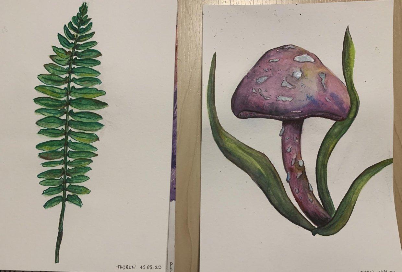 fern and mushroom - student project