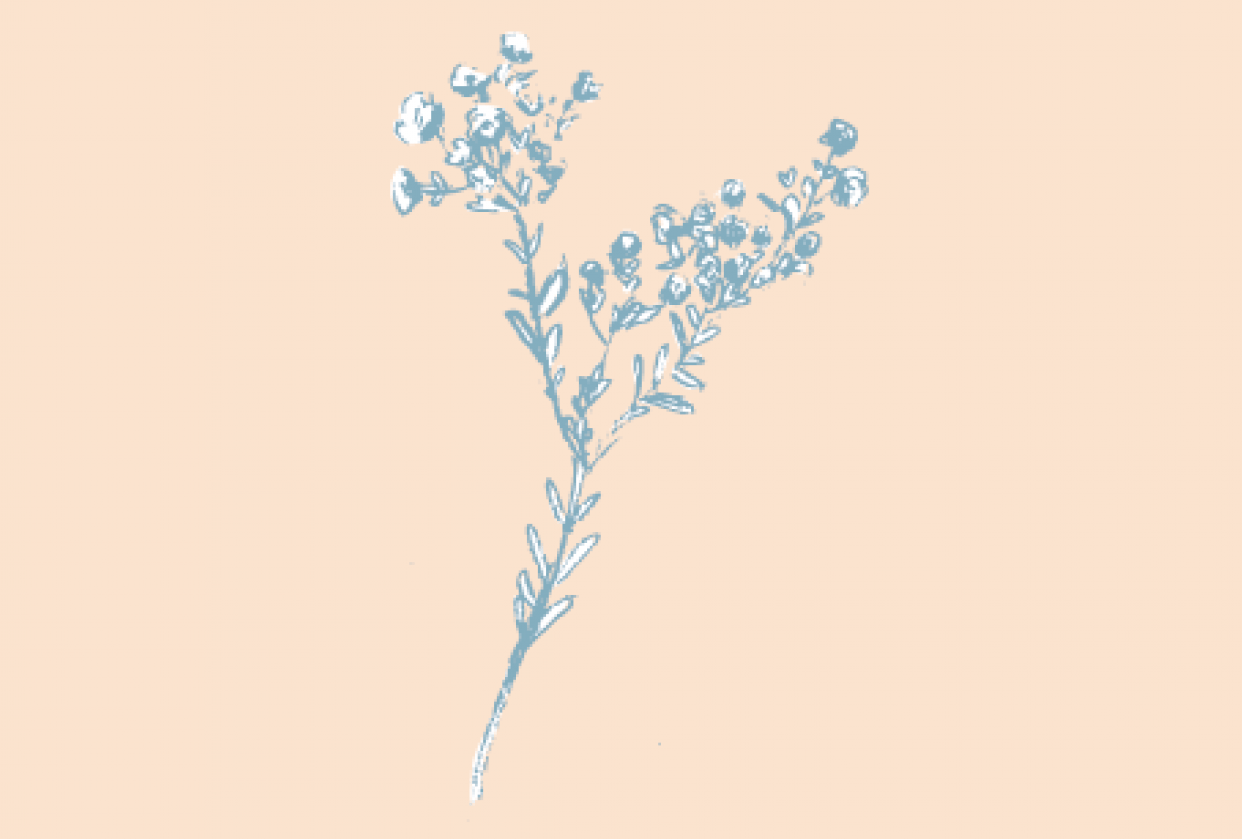 Botanicals - student project