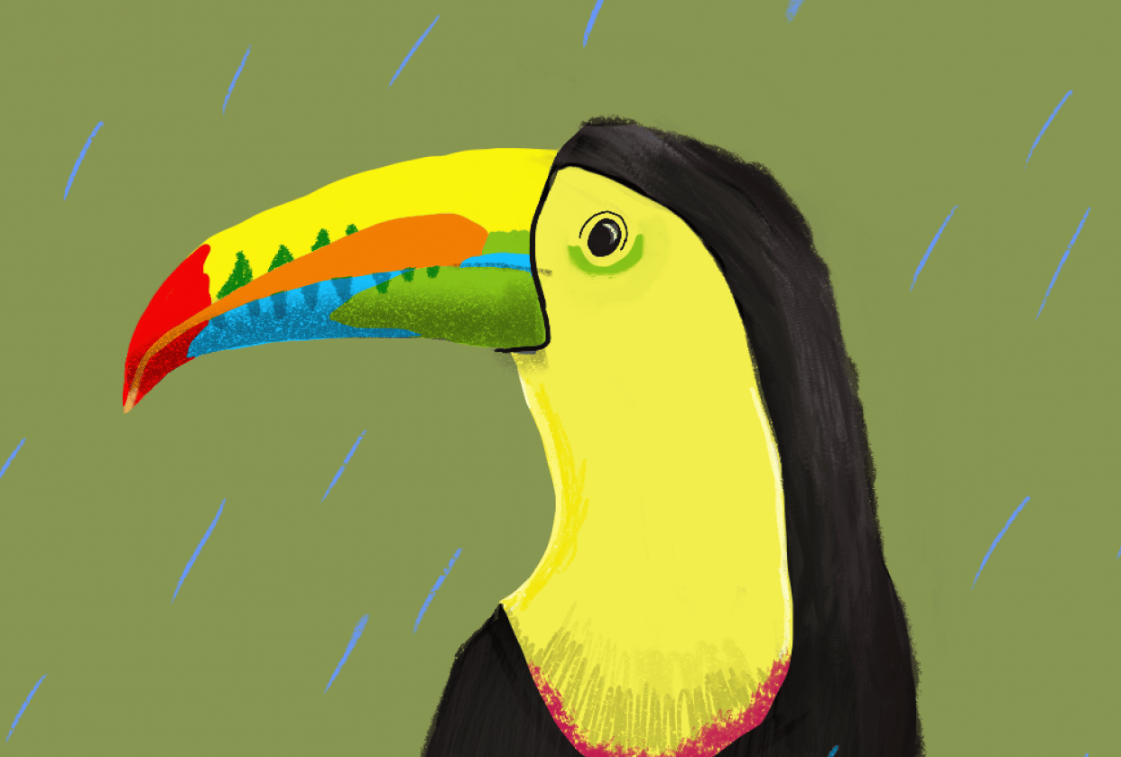 Toucan shapes - student project