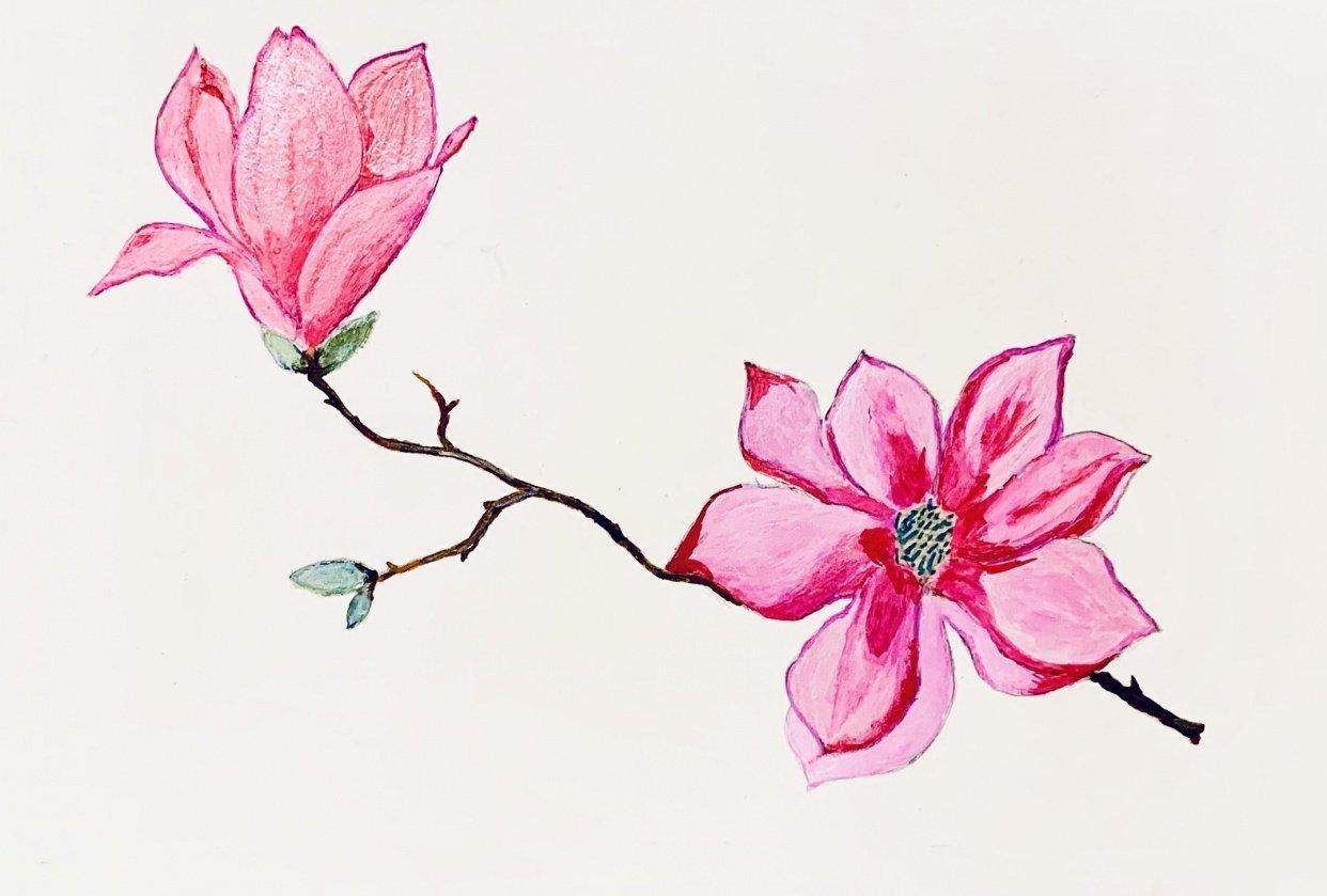 Magnolia blossom - student project