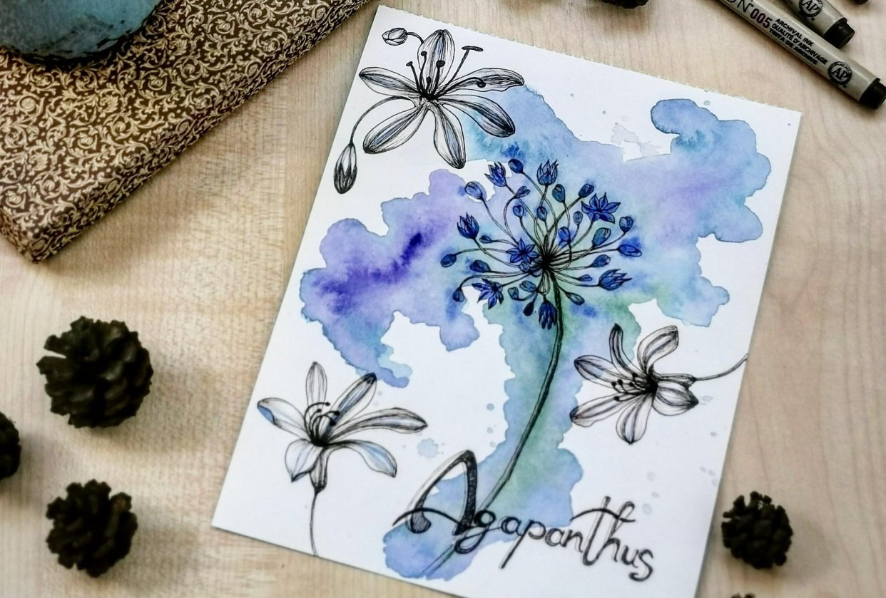 Agapanthus - student project