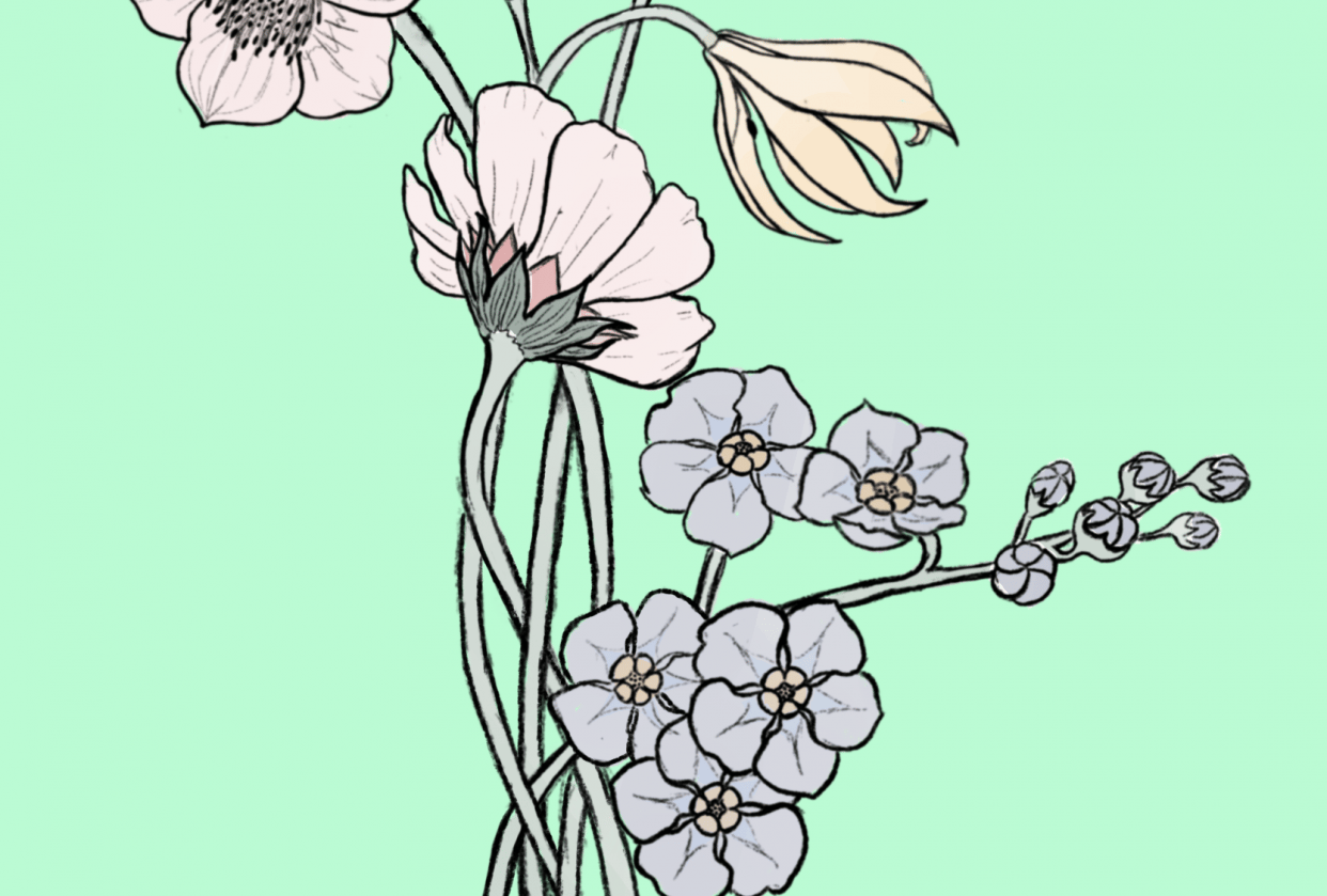 My first botanical illustration - student project
