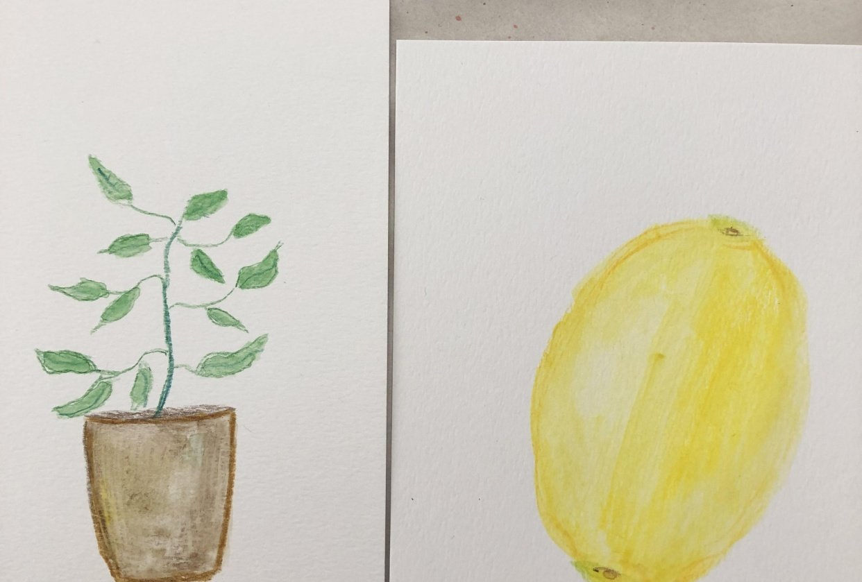 Plant and lemon - student project