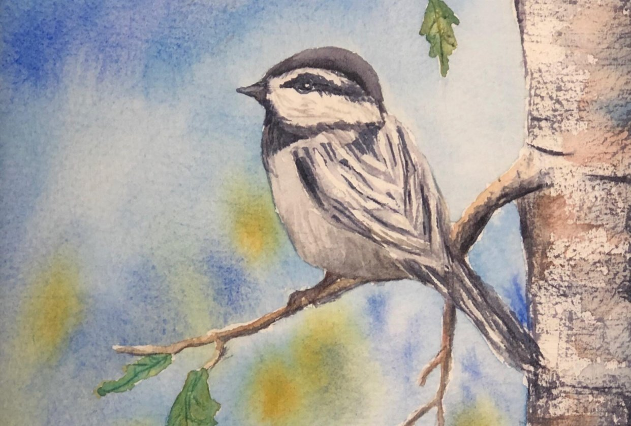 Watercolor Mountain Chickadee - student project