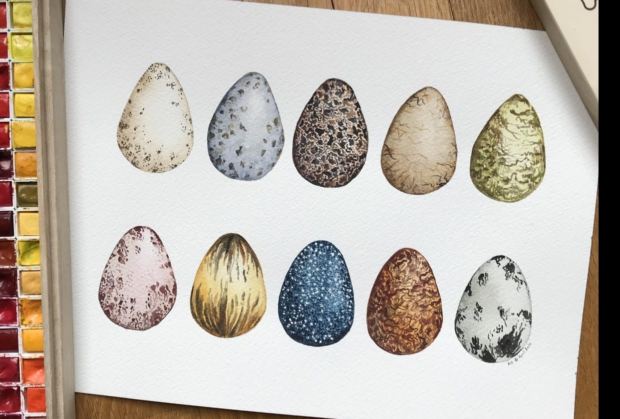 Bird eggs in watercolour - student project