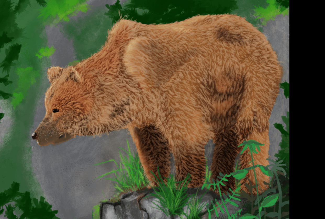 bear on rock - student project