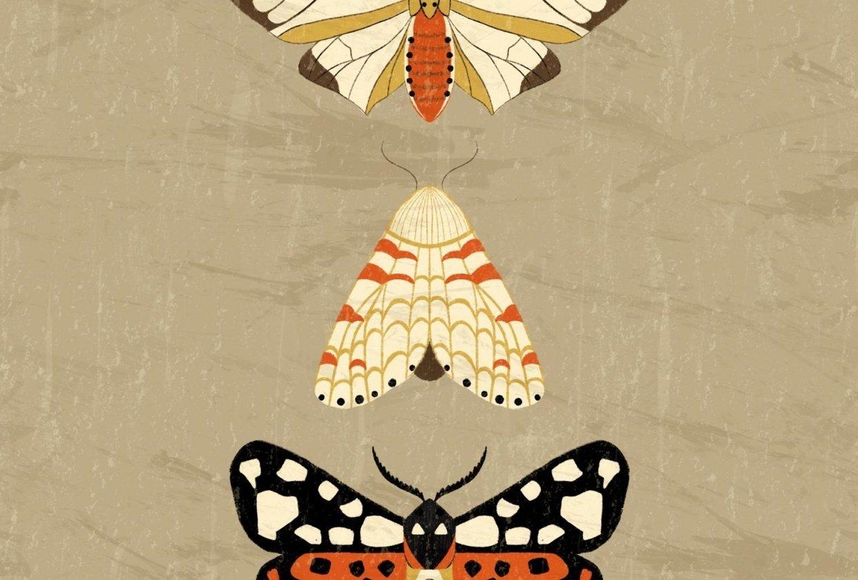 Moths - student project