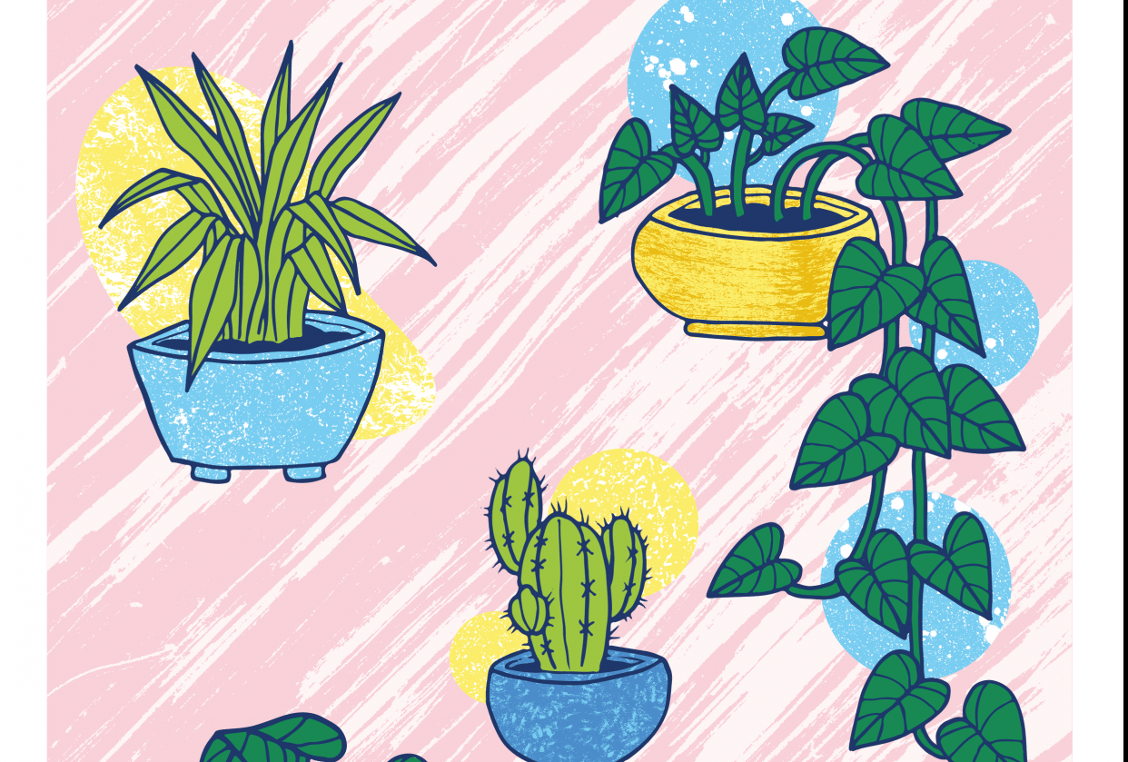 Kind plants - student project