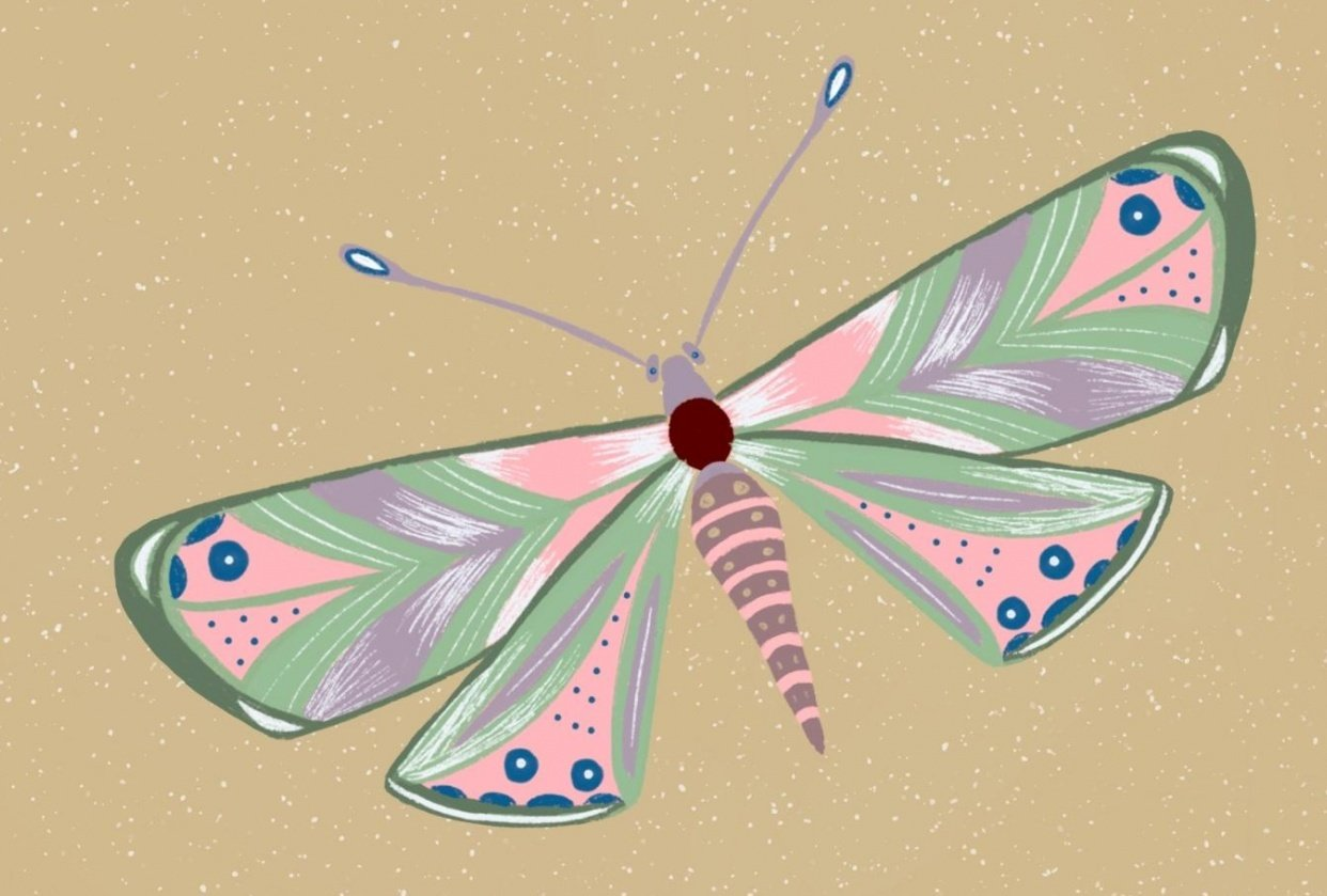 6 hours later 1 butterfly ;) - student project