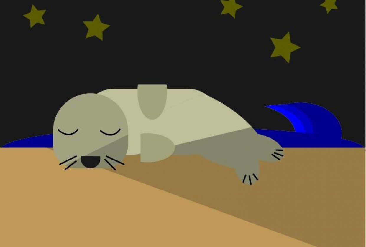 Sleeping Seal - student project
