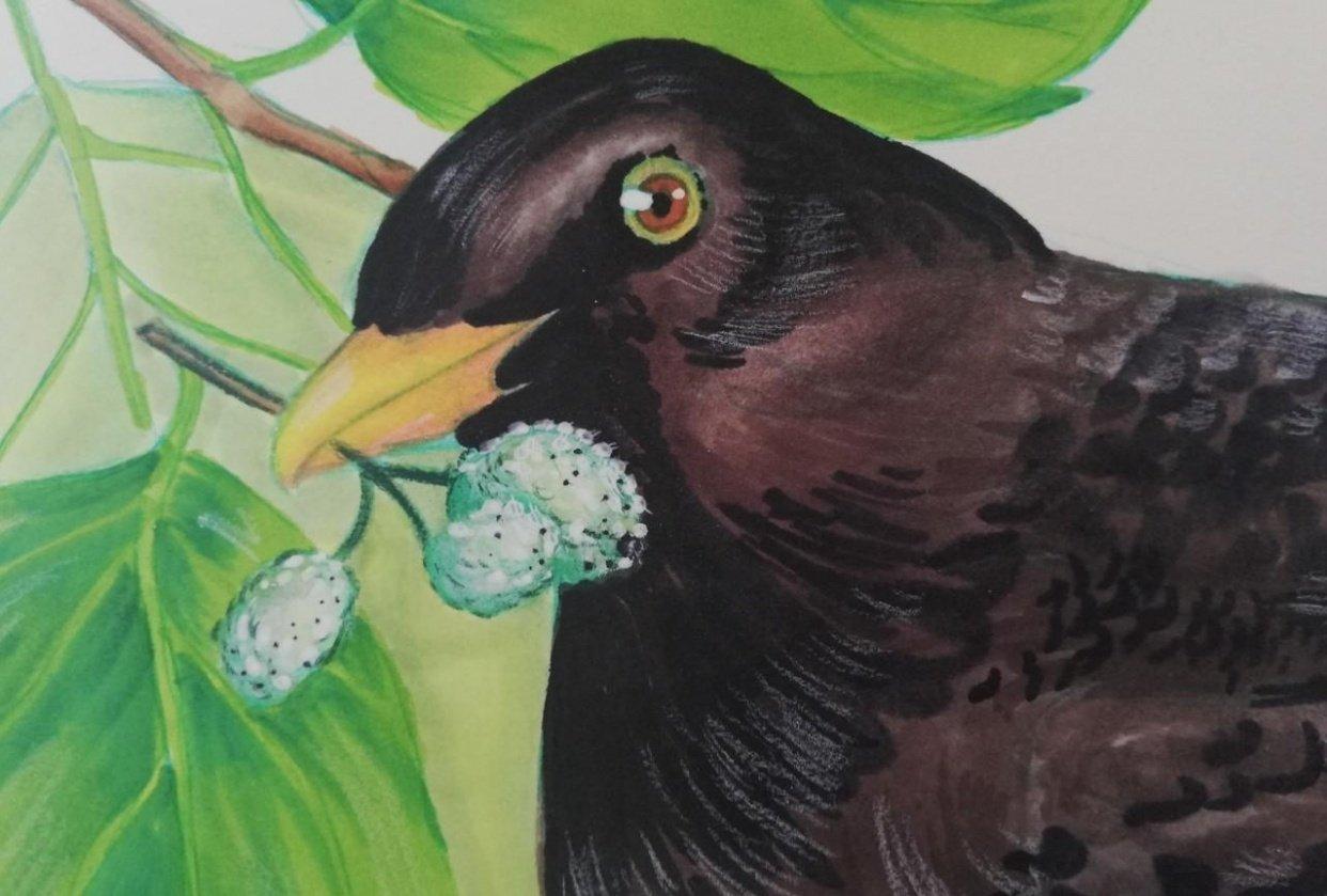 Mirlo bird - student project