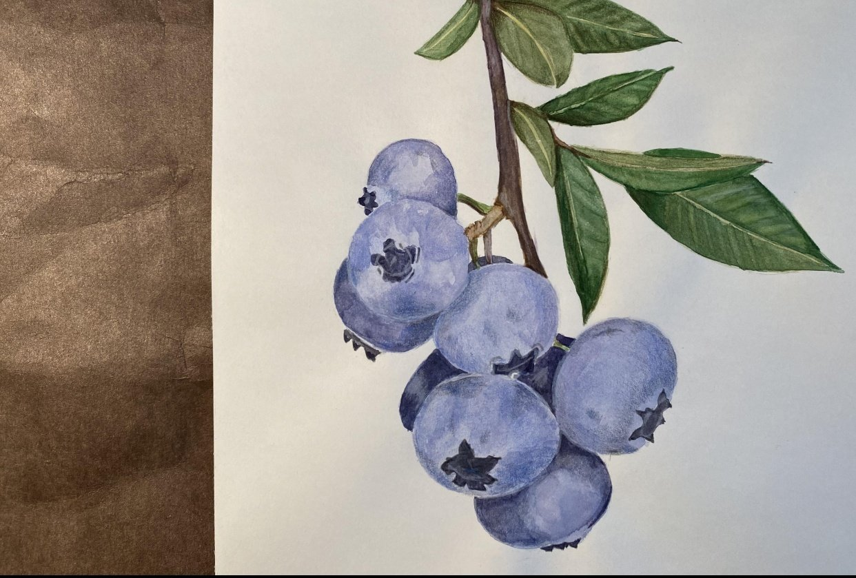 Blueberries - student project