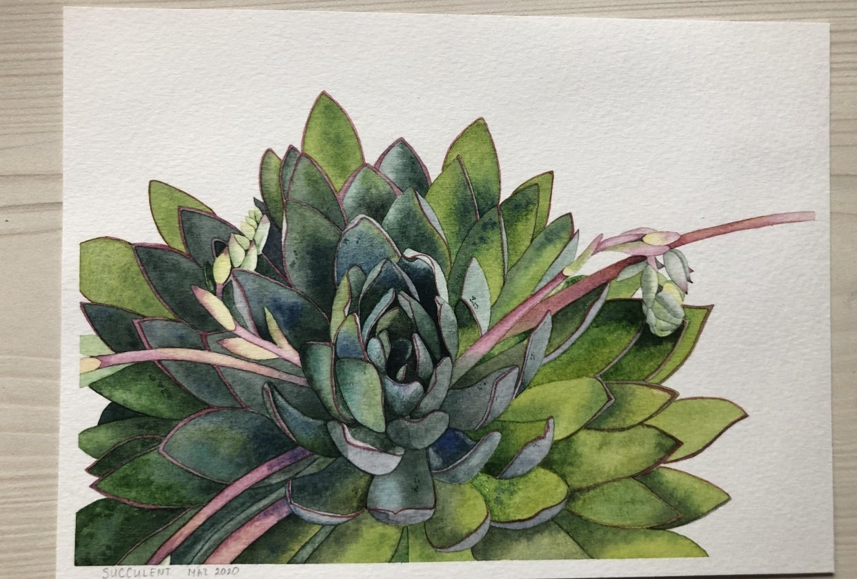 Succulent painting - student project