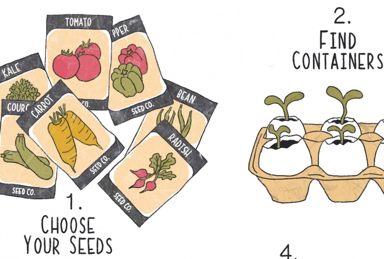 Tips for veg growing - student project