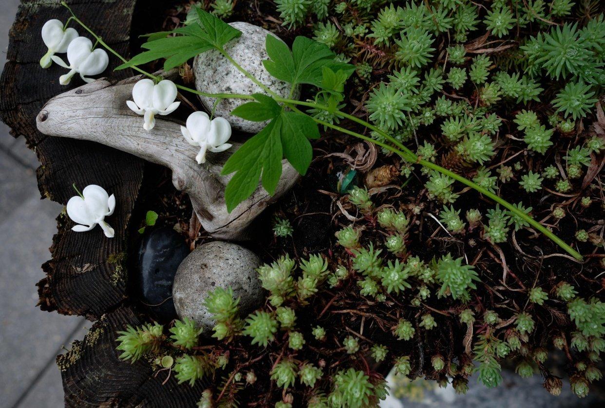 Pet Miniature Flower Arrangements - student project