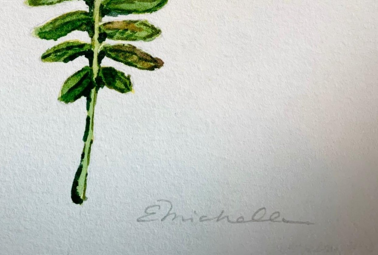 FERN... - student project