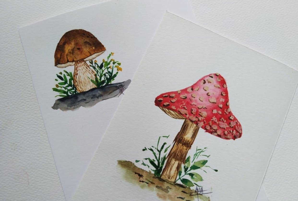 Mushrooms Mushrooms Everywhere... - student project