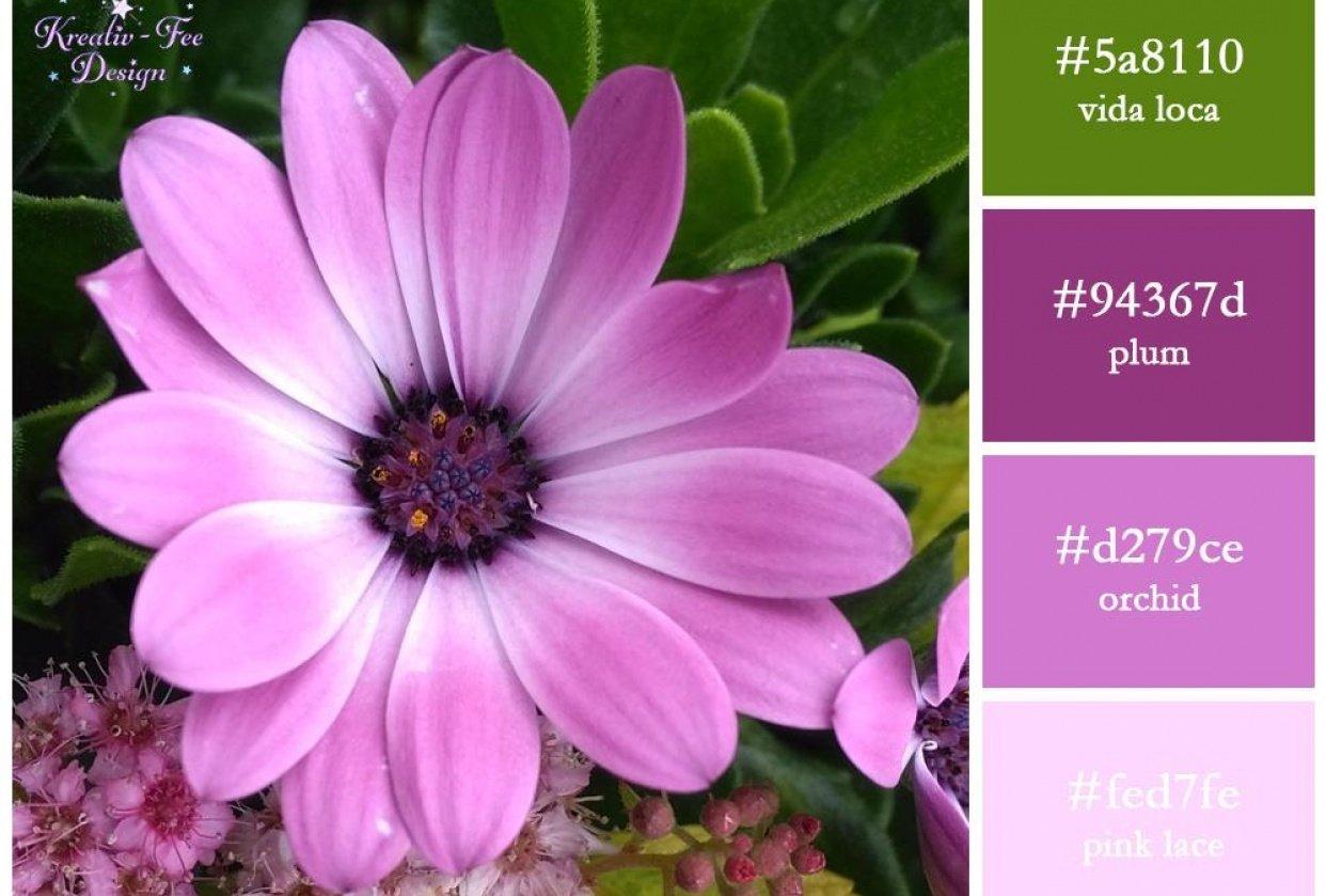Lilac Flower scheme - student project