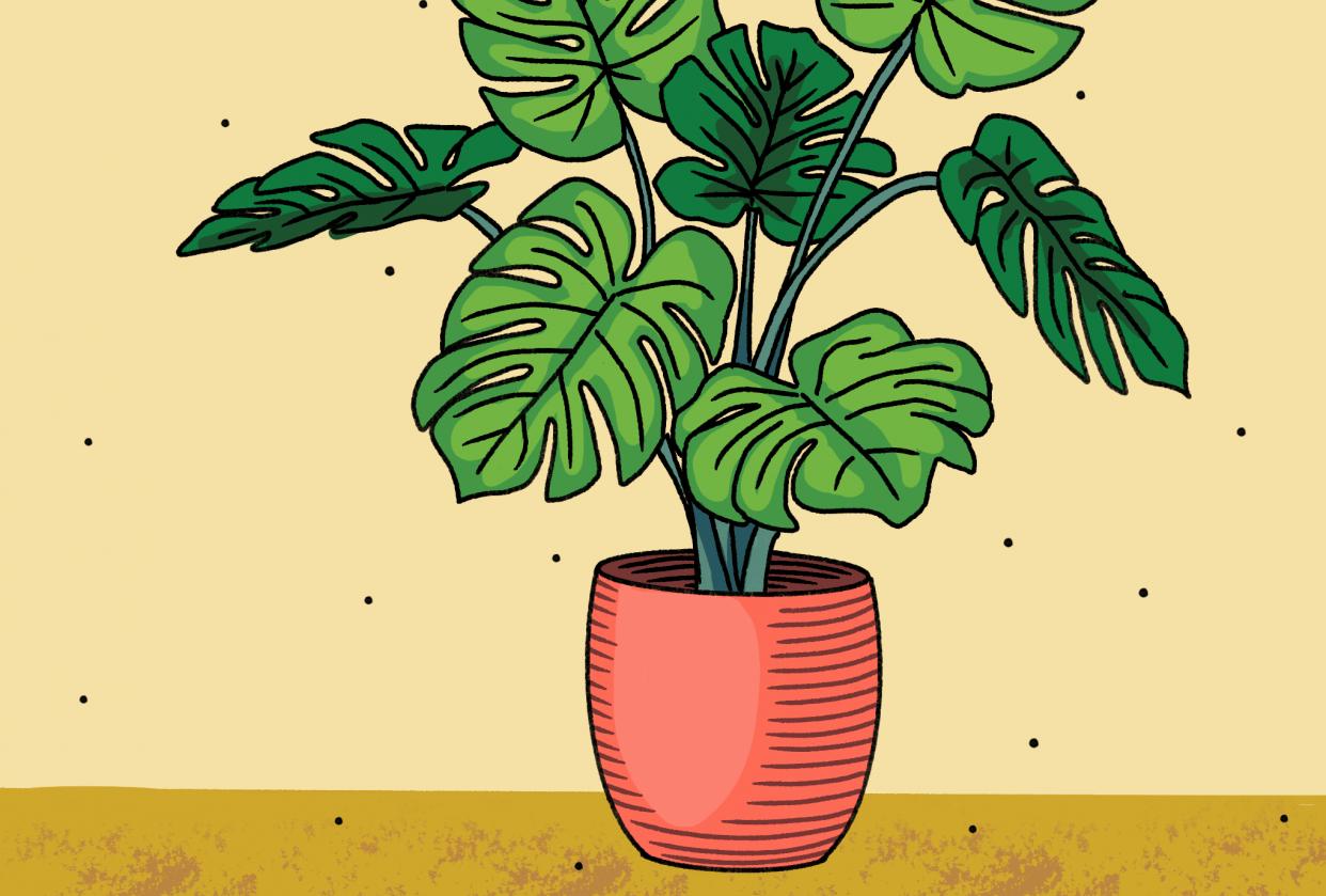 Shari's Plant - student project