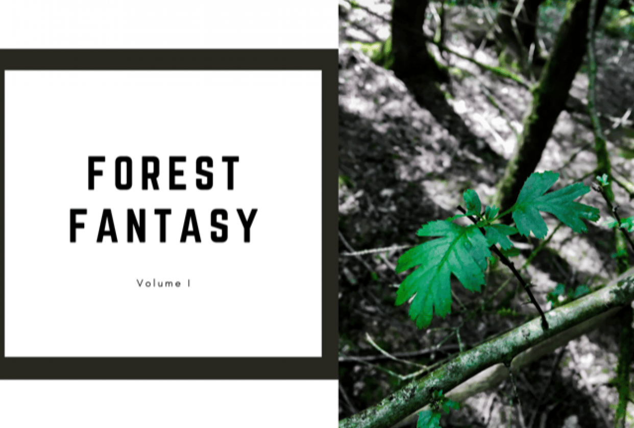 forest album - student project