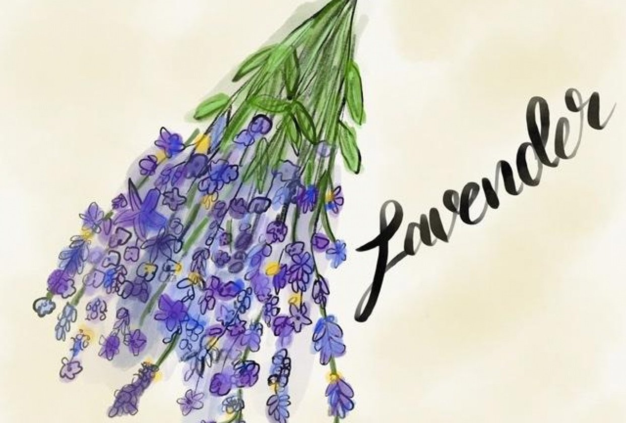 Lavender - student project