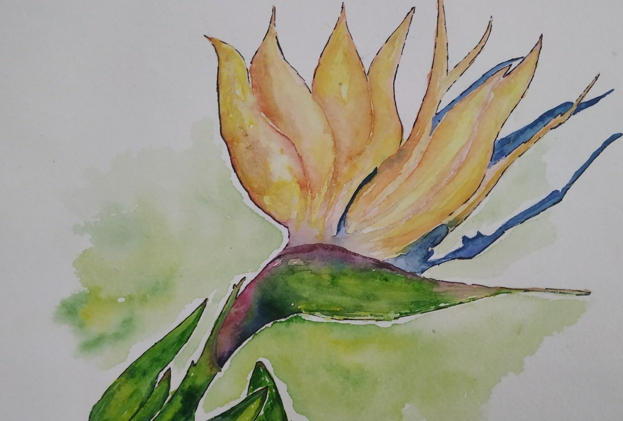 Birds Of Paradise - student project