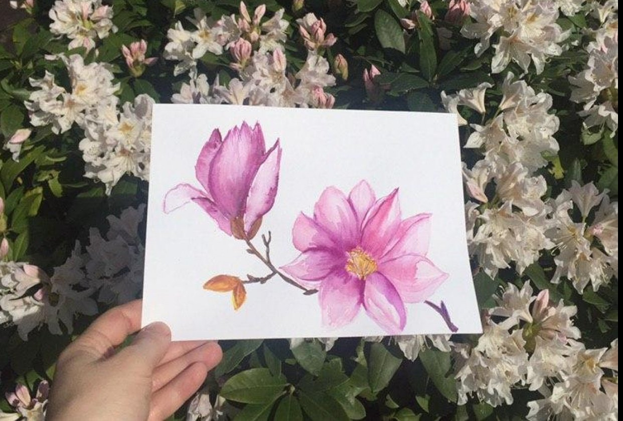 Magnolias - student project