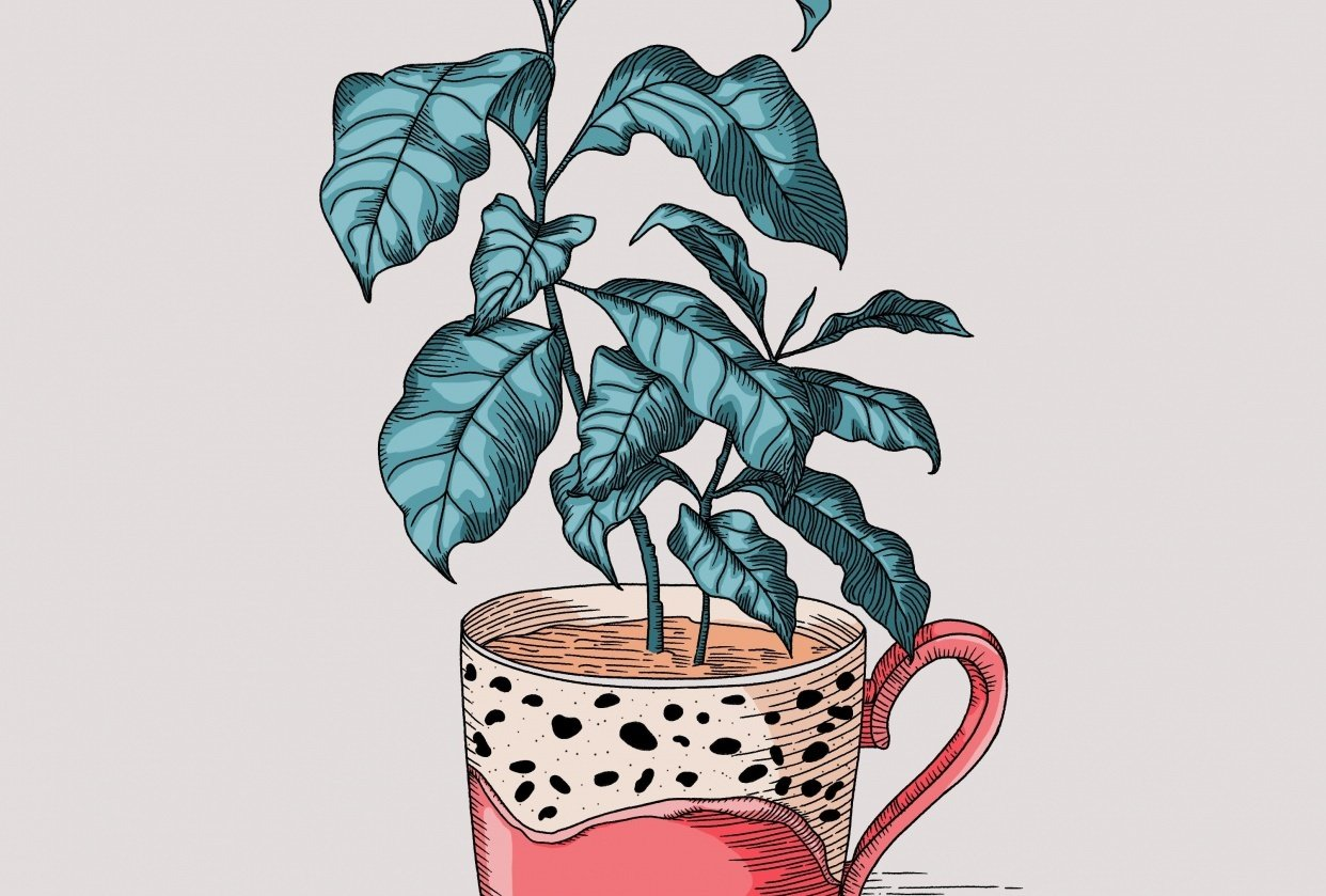 Coffee plant - student project