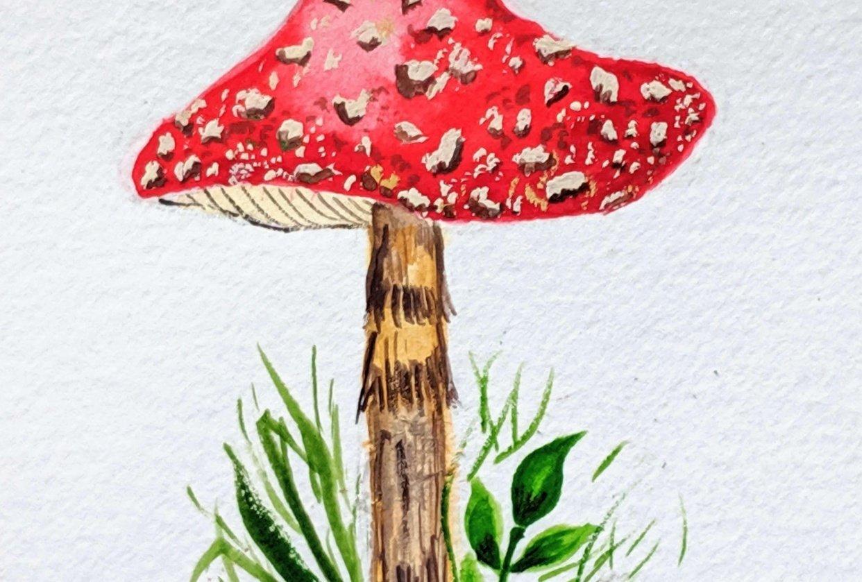 Love Mushrooms :-) - student project