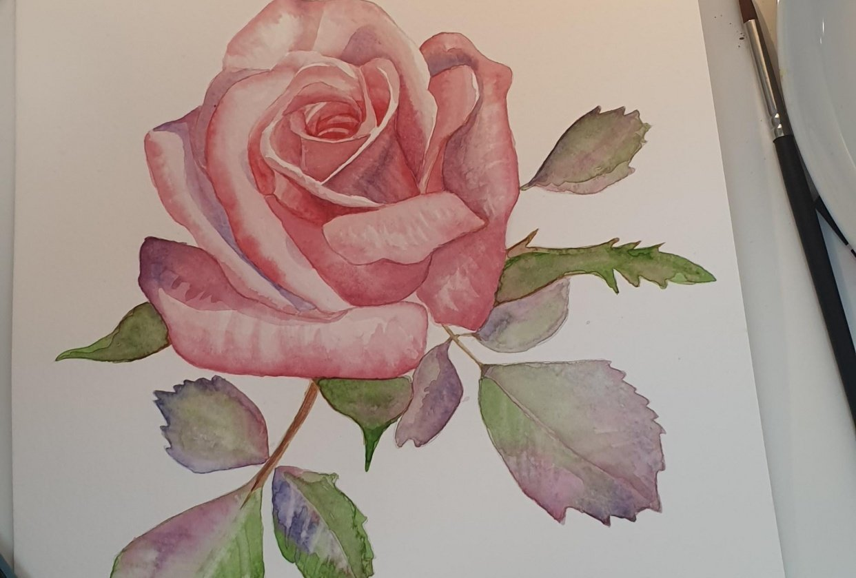 Pink rose - student project