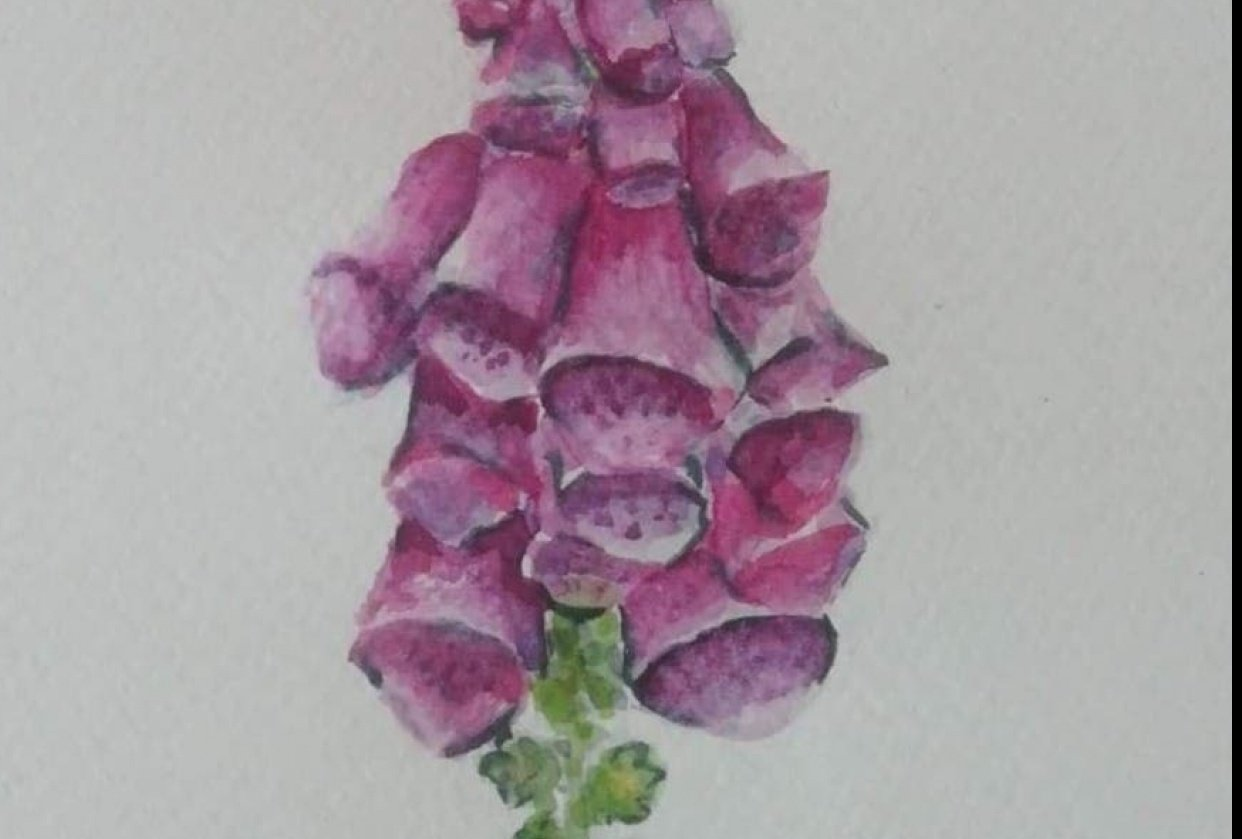 Watercolour in the Woods - Foxgloves - student project