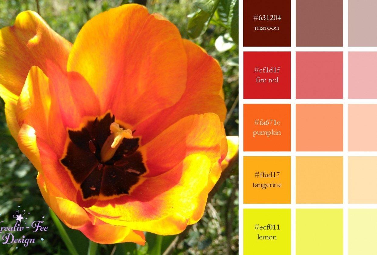Tulip color scheme - student project