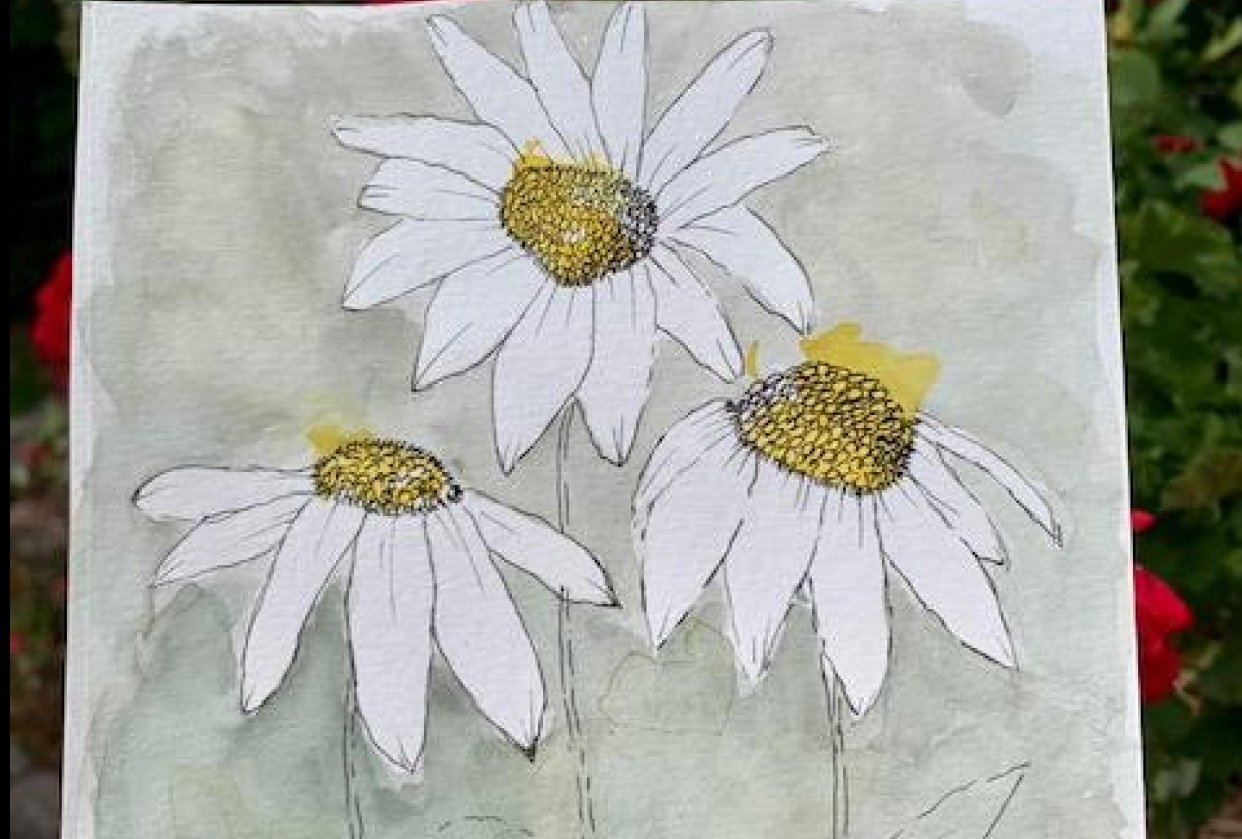 Daisies - student project