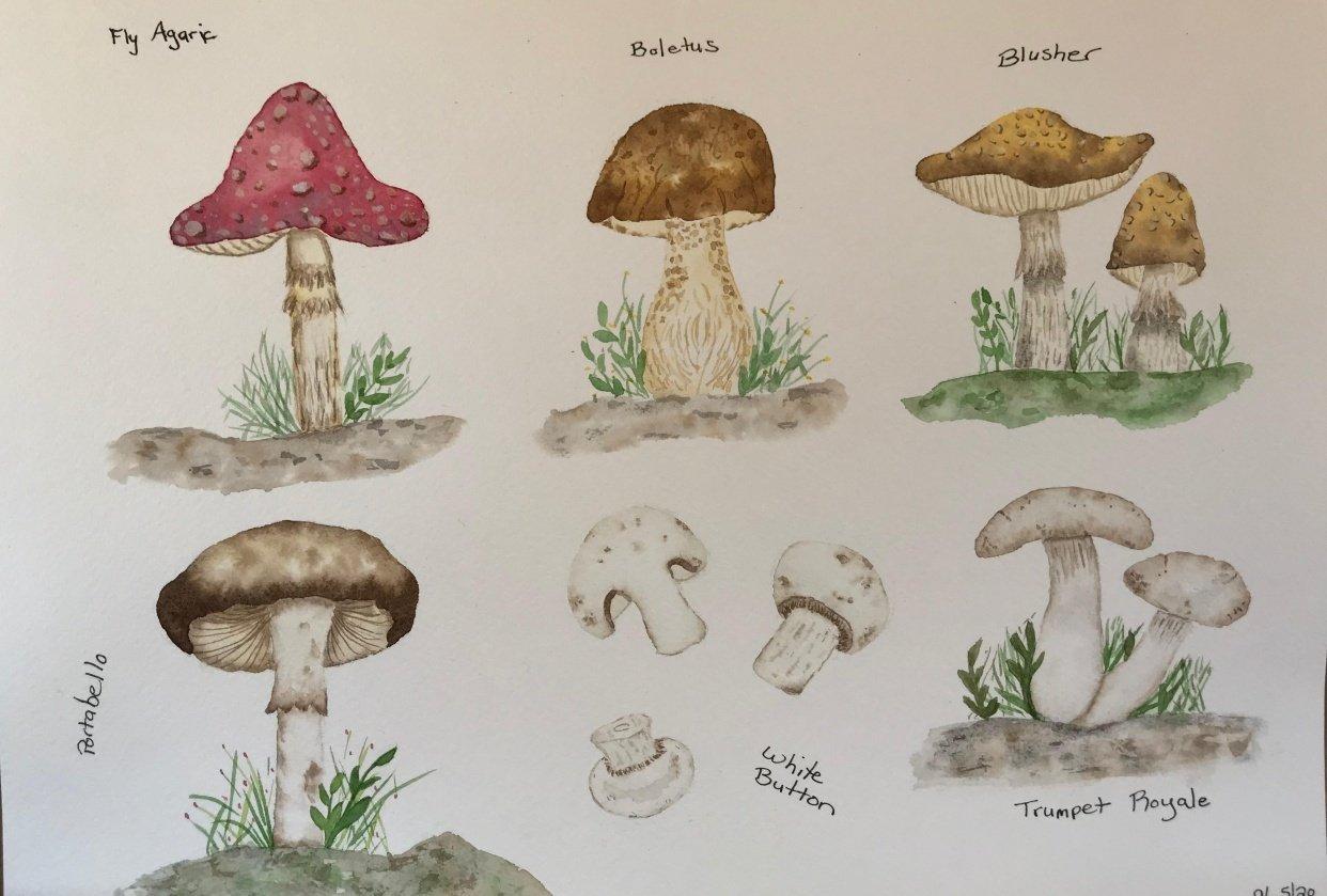 Mushrooms - student project