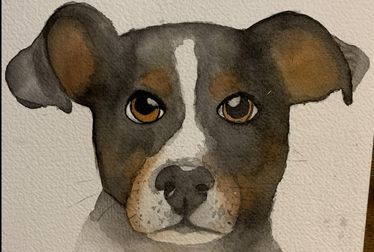 my dogs portraits - student project