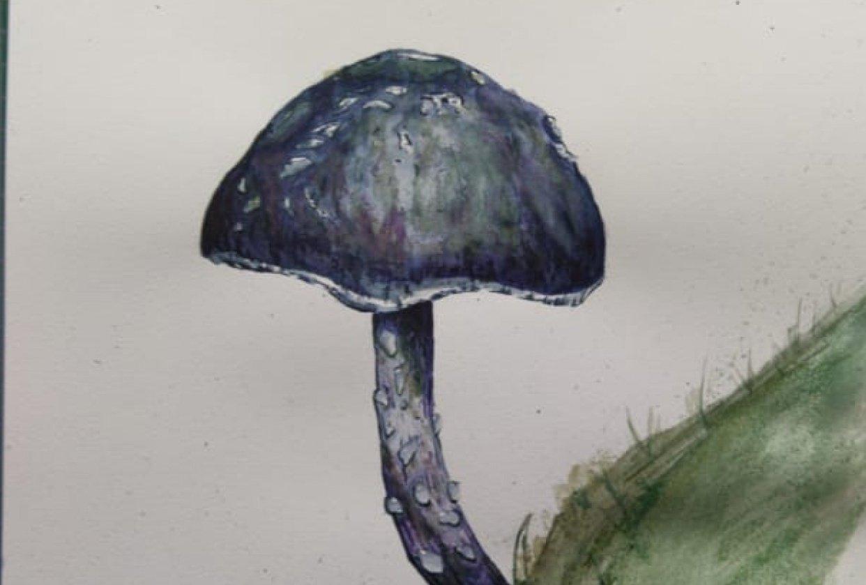 Happy Mushroom - student project
